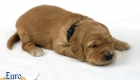 Rosie_Apollo_Jan2020_2wks_Mr Black (7)