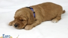Rosie_Apollo_Jan2020_2wks_Mr Blue (1)