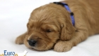 Rosie_Apollo_Jan2020_2wks_Mr Blue (2)