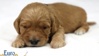 Rosie_Apollo_Jan2020_2wks_Mr Blue (3)