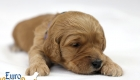 Rosie_Apollo_Jan2020_2wks_Mr Blue (4)