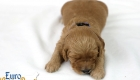 Rosie_Apollo_Jan2020_2wks_Mr Blue (5)