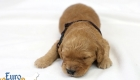 Rosie_Apollo_Jan2020_2wks_Mr Brown (4)