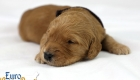 Rosie_Apollo_Jan2020_2wks_Mr Brown (5)