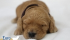 Rosie_Apollo_Jan2020_2wks_Mr Brown (6)