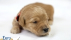 Rosie_Apollo_Jan2020_2wks_Mr Red (4)