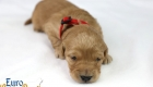 Rosie_Apollo_Jan2020_2wks_Mr Red (5)