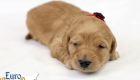 Rosie_Apollo_Jan2020_2wks_Mr Red (6)