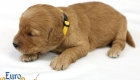 Rosie_Apollo_Jan2020_2wks_Ms Orange (3)