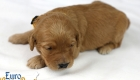 Rosie_Apollo_Jan2020_2wks_Ms Orange (6)