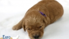 Rosie_Apollo_Jan2020_2wks_Ms Purple (1)