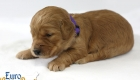 Rosie_Apollo_Jan2020_2wks_Ms Purple (2)