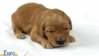 Rosie_Apollo_Jan2020_2wks_Ms Purple (3)