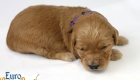 Rosie_Apollo_Jan2020_2wks_Ms Purple (6)