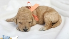 Lila_Becks_Dec2019_2wks_Ms. Peach (1)
