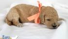 Lila_Becks_Dec2019_2wks_Ms. Peach (2)