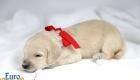 Lila_Becks_Dec2019_2wks_Ms. Red (7)