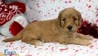 Rosie_Apollo_Jan20_4Wks_Mr Blue (4)