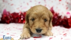 Rosie_Apollo_Jan20_4Wks_Mr Blue (5)