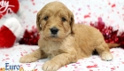 Rosie_Apollo_Jan20_4Wks_Mr Blue (6)