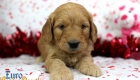 Rosie_Apollo_Jan20_4Wks_Mr Brown (3)