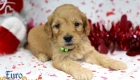 Rosie_Apollo_Jan20_4Wks_Mr Green (4)