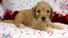 Rosie_Apollo_Jan20_4Wks_Mr Green (5)