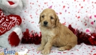 Rosie_Apollo_Jan20_4Wks_Mr Red (4)