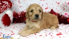 Rosie_Apollo_Jan20_4Wks_Mr Red (5)