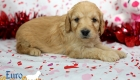 Rosie_Apollo_Jan20_4Wks_Mr Red (6)