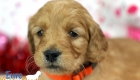 Rosie_Apollo_Jan20_4Wks_Ms Orange (1)