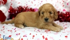 Rosie_Apollo_Jan20_4Wks_Ms Orange (2)