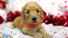 Rosie_Apollo_Jan20_4Wks_Ms Orange (5)