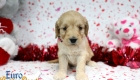 Rosie_Apollo_Jan20_4Wks_Ms Pink (2)