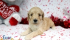 Rosie_Apollo_Jan20_4Wks_Ms Pink (4)