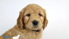 Rosie_Apollo_Jan20_6wks_MrBlack_04