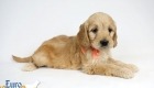 Rosie_Apollo_Jan20_6wks_MsPeach_01