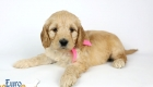 Rosie_Apollo_Jan20_6wks_MsPink_01