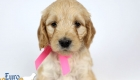 Rosie_Apollo_Jan20_6wks_MsPink_05