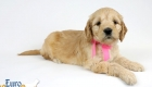 Rosie_Apollo_Jan20_6wks_MsPink_08