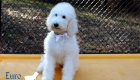 Emma_Tucker_ July2019_16wk_Ms White (2)