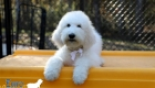 Emma_Tucker_ July2019_16wk_Ms White (3)