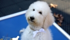 Emma_Tucker_ July2019_16wk_Ms White (8)