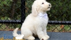 Emma_Tucker_Jul2019_10wks_Ms White (7)