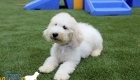 Emma_Tucker_Jul2019_14wk_Ms White (10)
