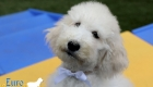 Emma_Tucker_Jul2019_14wk_Ms White (3)