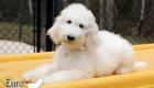 Emma_Tucker_Jul2019_14wk_Ms White (6)