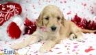 Rosie_Apollo_Jan20_4Wks_Ms Peach (2)
