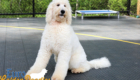 Abby_Tucker_Jul 2019_9 Months_MS Yellow (7)