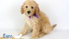 Piper_Apollo_Feb11_9Wk_Ms.Purple_01